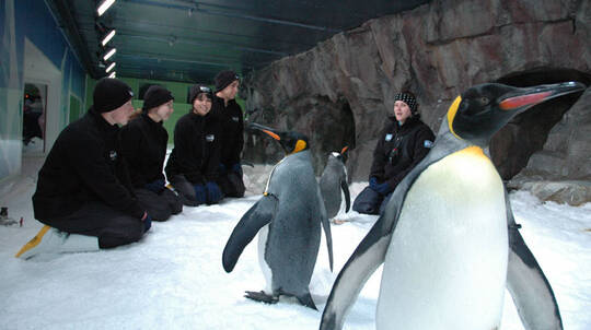 Penguin Discovery at Kelly Tarlton's Aquarium