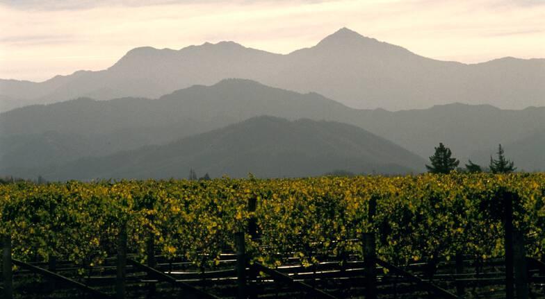 Full Day Marlborough Wine Tour