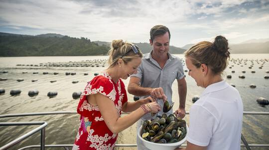 Marlborough Sounds Greenshell Mussel Cruise