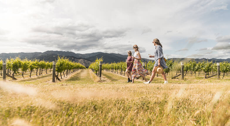 Marlborough Afternoon Wine Tour with Tastings - 5 Hours