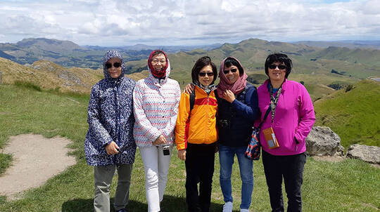 The Best of Napier Tour with Honey Tasting - 4 Hours