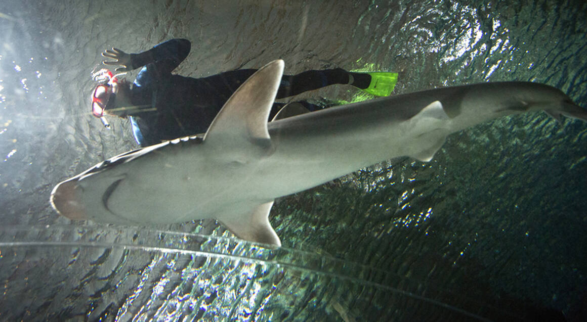 Swim with the Sharks at the National Aquarium - For 2