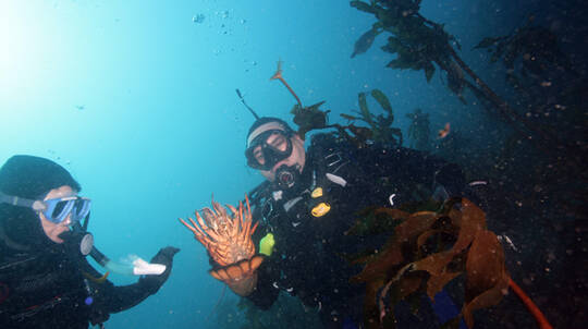 Hunt and Gather Certified Diver Full Day Trip
