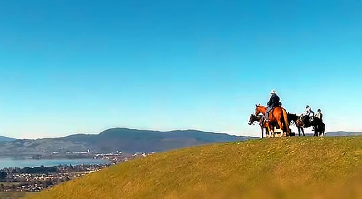 Guided Rotorua Horse Trek - 60 Mins