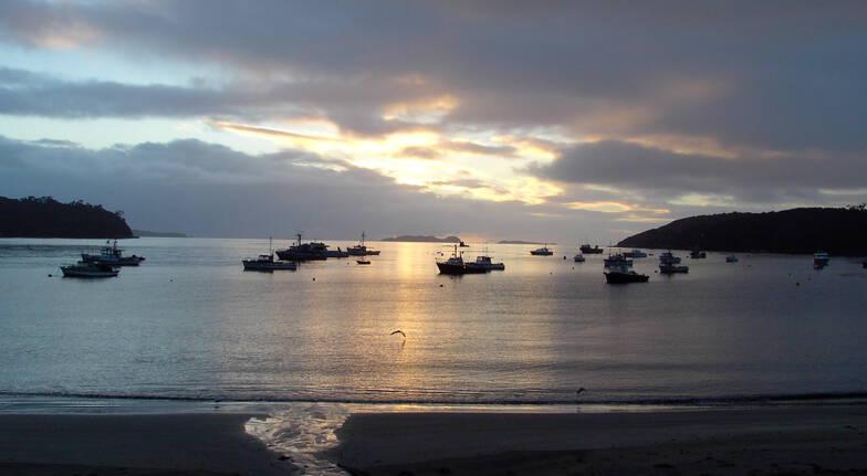 Stewart Island Dusk Cruise and Wild Kiwi Encounter
