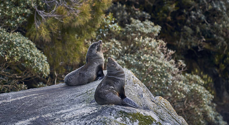 Milford Sound Overnight Cruise with Dinner  For 2