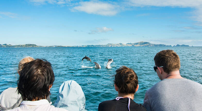 Discover the Bay of Islands Cruise - Half Day