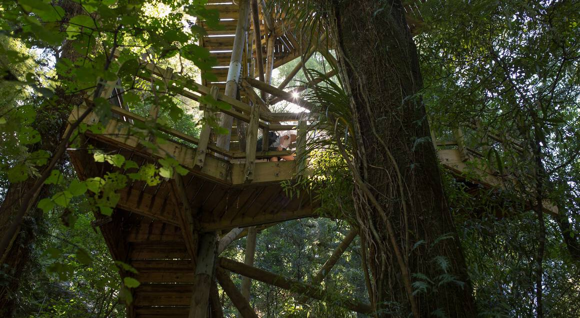 Sanctuary Mountain Ancient Forest Guided Tour