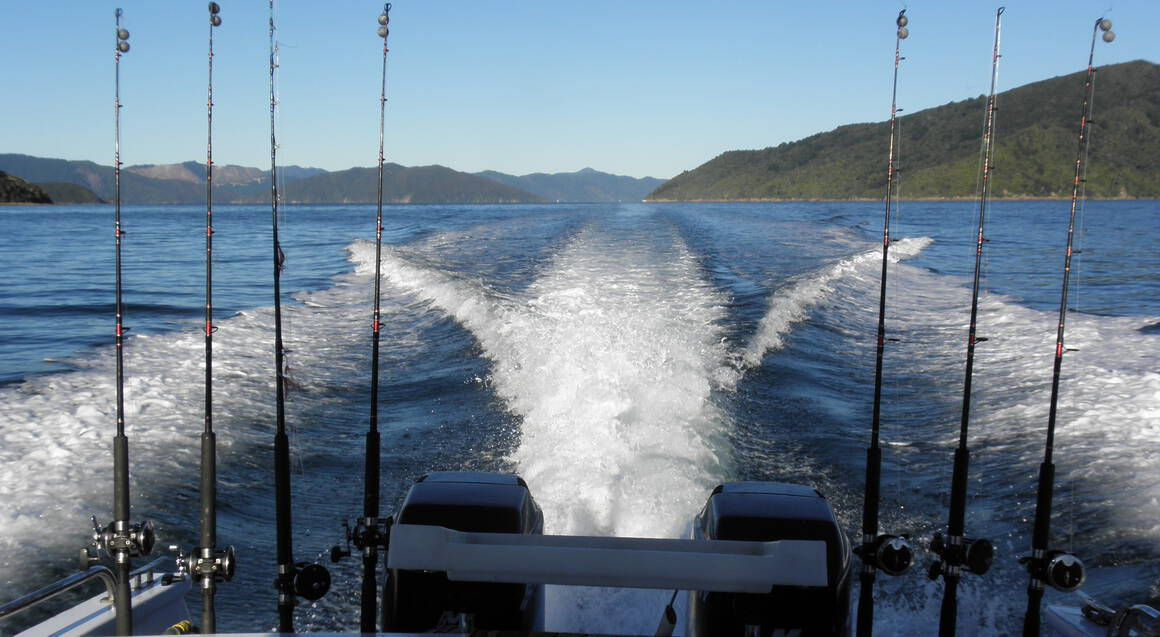 Queen Charlotte Sounds Brunch Cruise and Wine Tour - Child