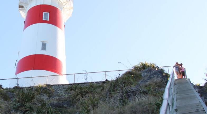 Palliser Bay Scenic Tour departing Wellington - Full Day