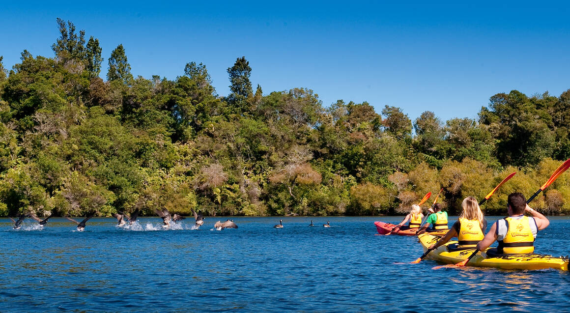 Scenic Guided Lake McLaren Kayak Tour - 3 Hours - For 2