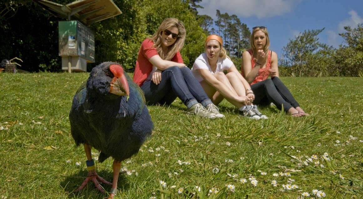 Zealandia Wildlife Sanctuary Tour by Day