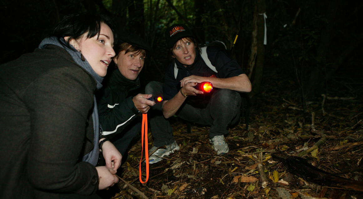 Zealandia Wildlife Sanctuary Tour by Torchlight