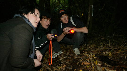 Zealandia Wildlife Sanctuary Tour by Torchlight