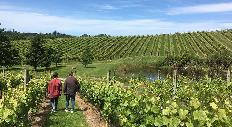 Nelson Winery Tour with Tastings and Lunch  7 Hours